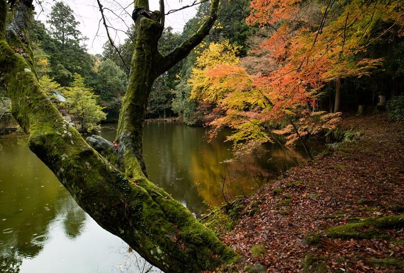 福王寺山、金亀池の紅葉