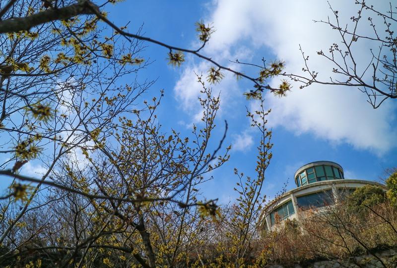マンサクと広島市植物公園の展望台