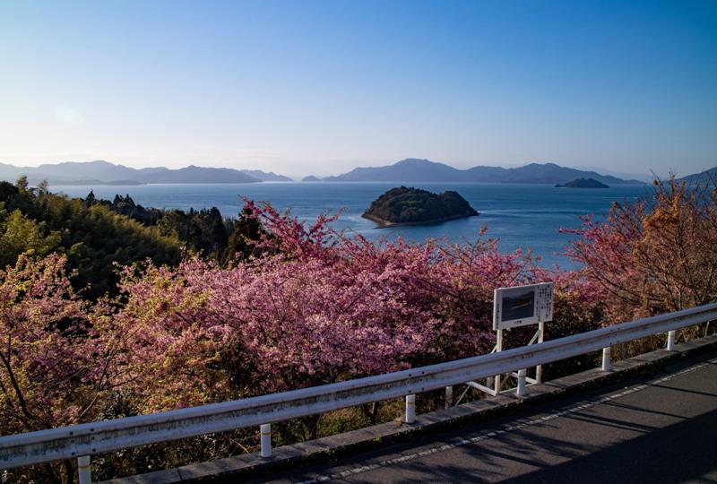 大芝島の河津桜と小芝島(別名:ハート島)の眺望