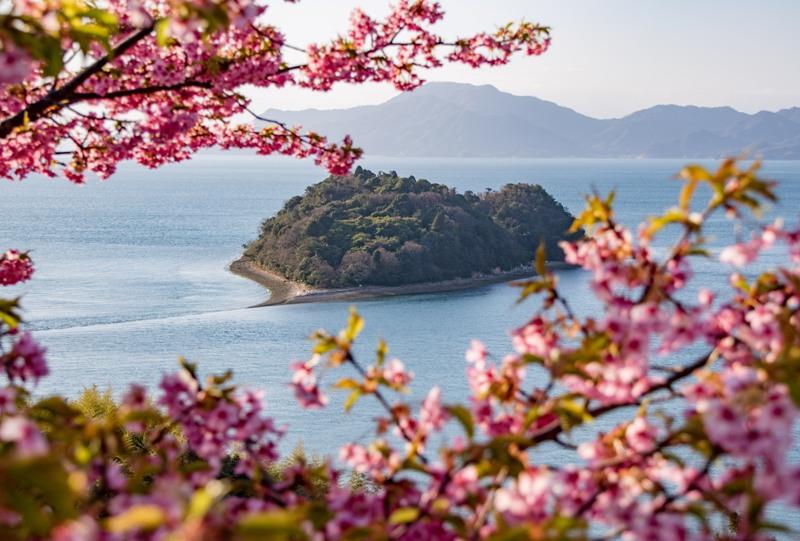 大芝島の河津桜と小芝島(ハート島)