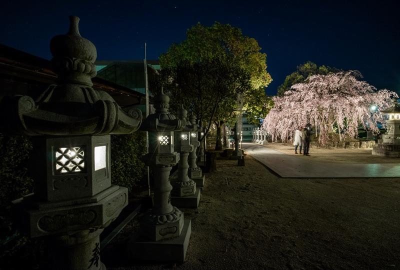 観音神社、しだれ桜のライトアップと灯篭