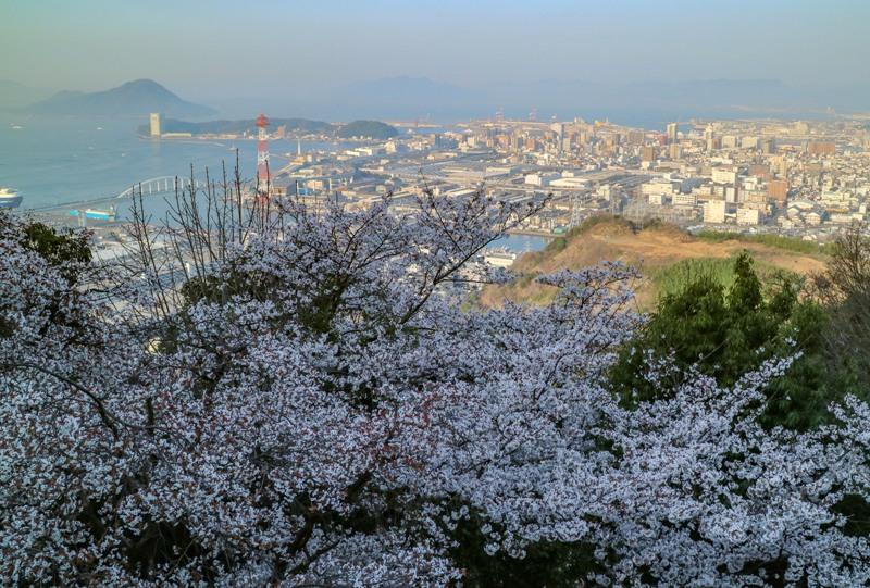 黄金山、桜とプリンスホテル