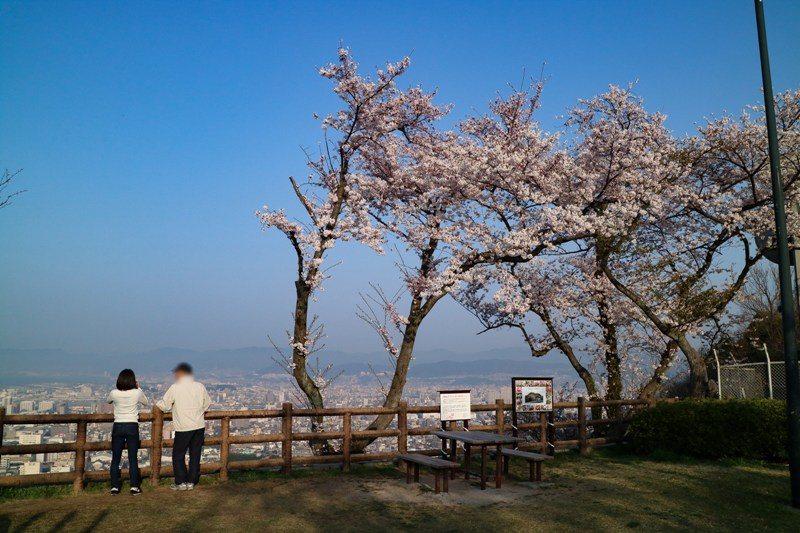 黄金山、海側の展望広場と桜