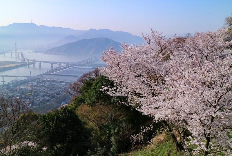 黄金山、桜と仁保JCT(海田大橋)