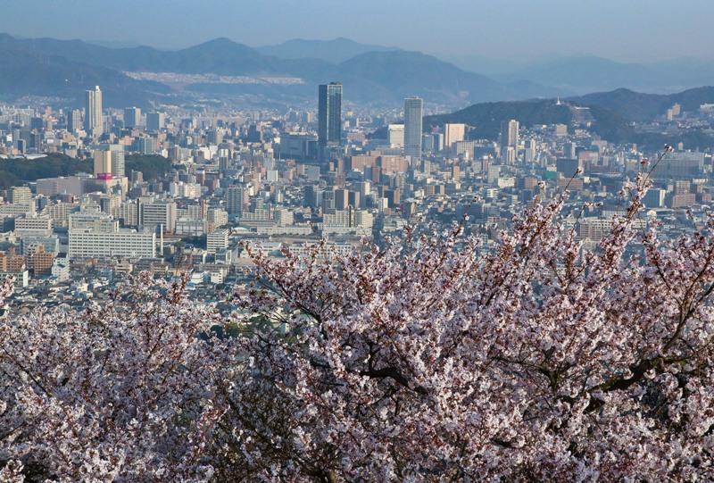 黄金山、桜と広島駅方面の眺め