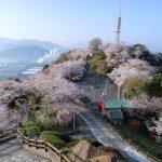 『黄金山の桜』桜、瀬戸内海、広島の街を見渡す絶景~!!