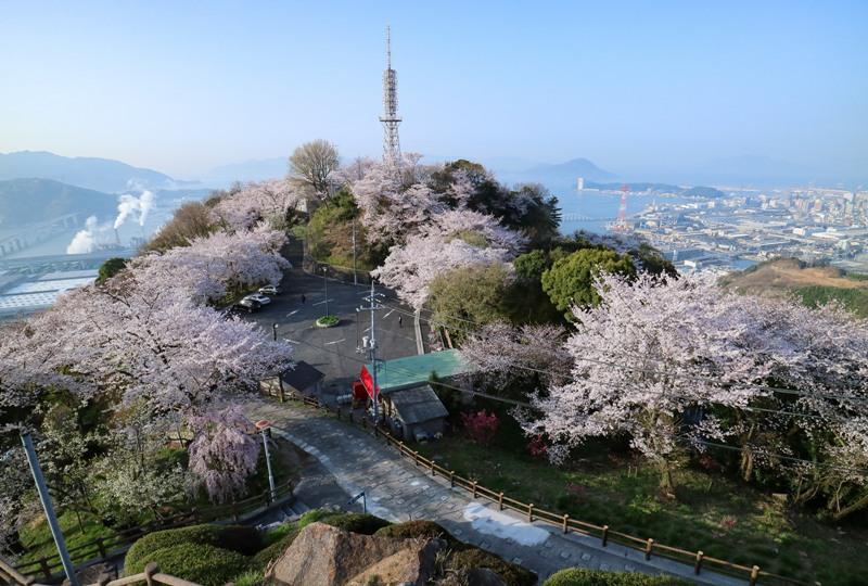 黄金山、山頂展望台から桜と瀬戸内海の絶景