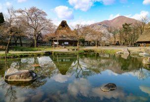 白川郷、合掌造り民家園は桜と合掌造りのリフレクションが美しい