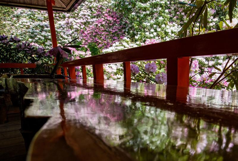 右平『花園の里』、机に映るシャクナゲ