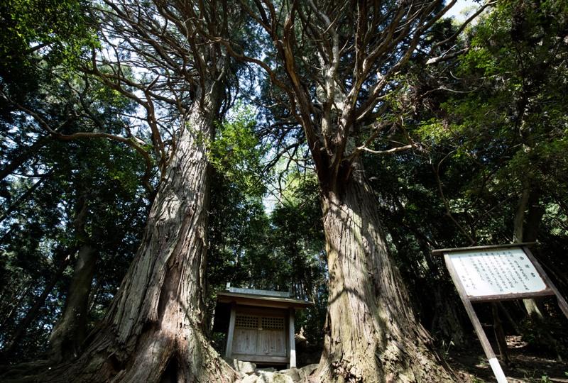 右平『花園の里』、樹齢700年の夫婦杉
