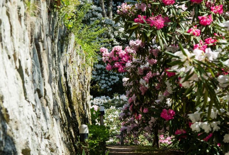 右平『花園の里』、石垣とシャクナゲ