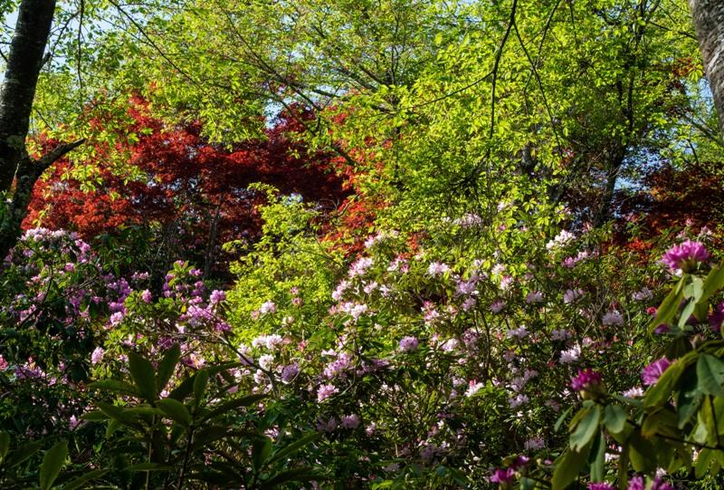 右平『花園の里』、シャクナゲ