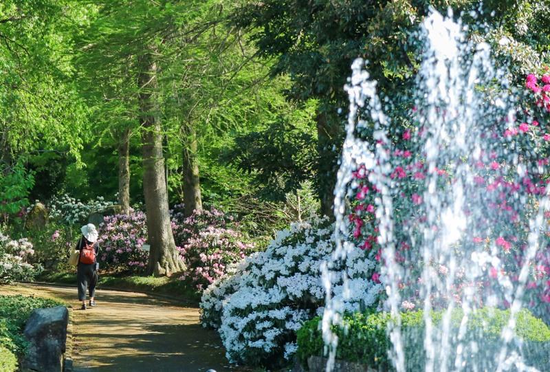 花みどり公園、噴水とシャクナゲ