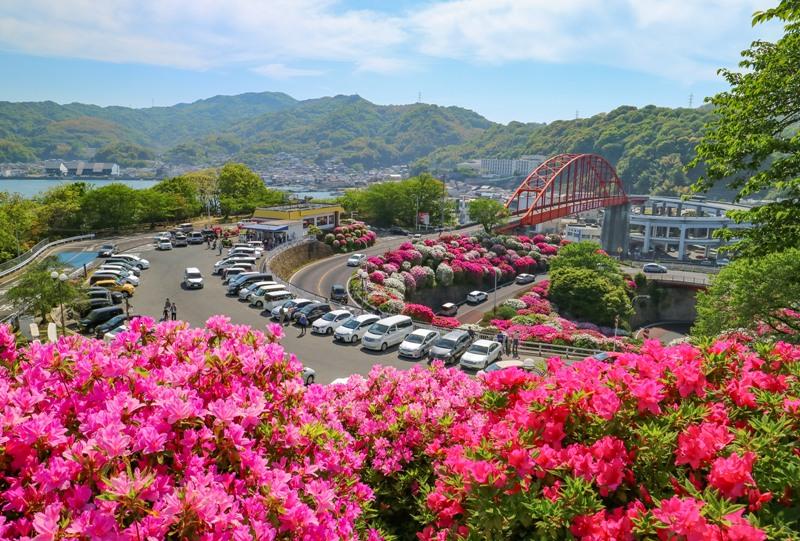 音戸大橋とツツジ、観光ハウス付近からの眺望