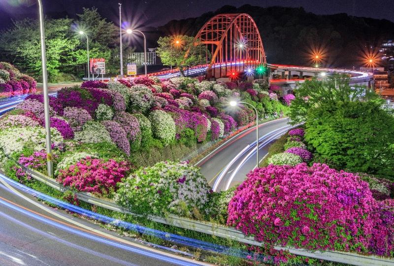 音戸大橋とツツジの夜景