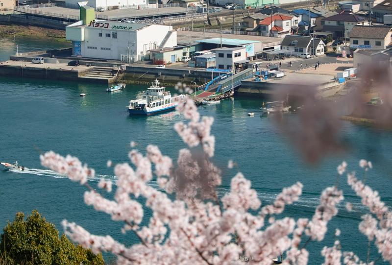 桜満開の千光寺公園と尾道水道
