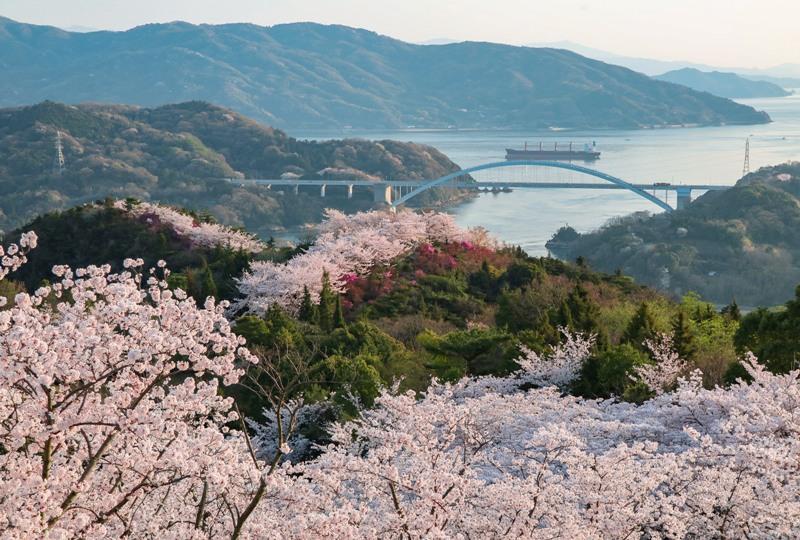 しまなみ海道、伯方島の開山公園の桜
