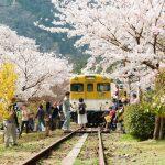 『安野花の駅公園』キハ58と桜、桃、レンギョウが咲く夢の空間!