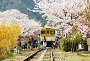 安野花の駅公園と桜に囲まれたキハ58