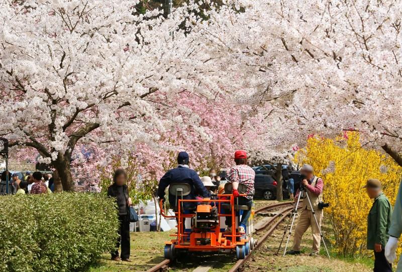 安野花まつり、トロッコ列車
