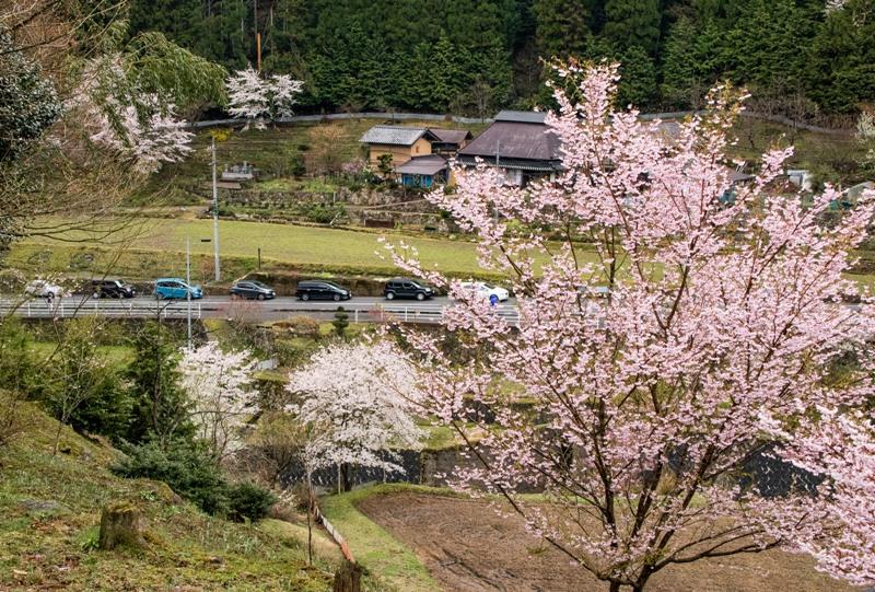 与一野のしだれ桜への道