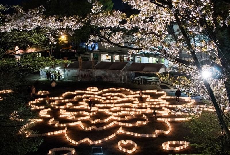 広島市植物公園、ぼんぼりの八重桜迷路