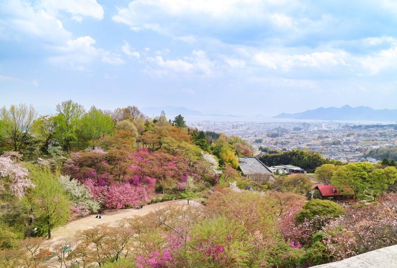 広島市植物公園の桜を展望台から望む