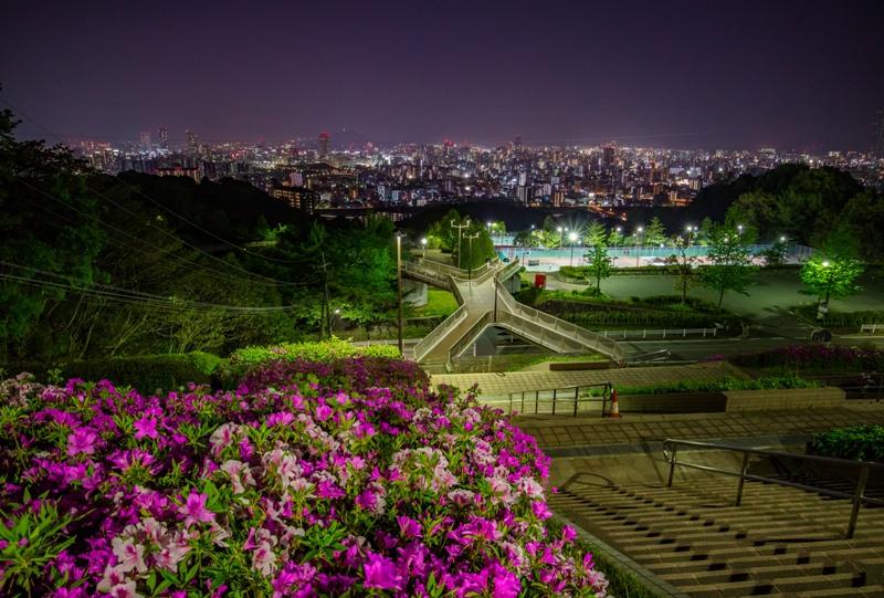 竜王公園、ツツジの咲く夜景