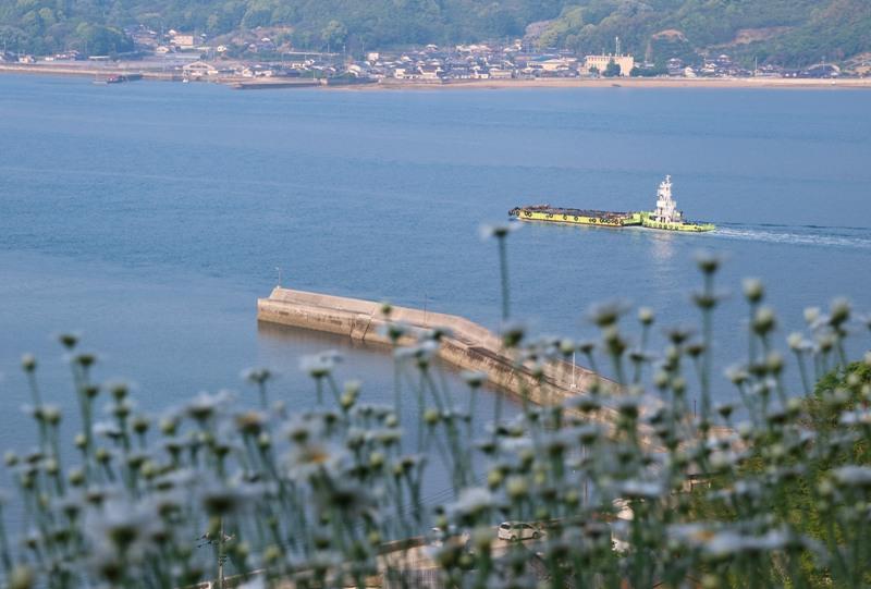 馬神除虫菊畑と瀬戸内海を航行する船