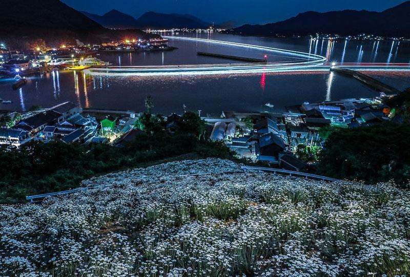 馬神除虫菊畑からの夜景