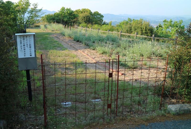 因島、白滝フラワーラインの除虫菊畑