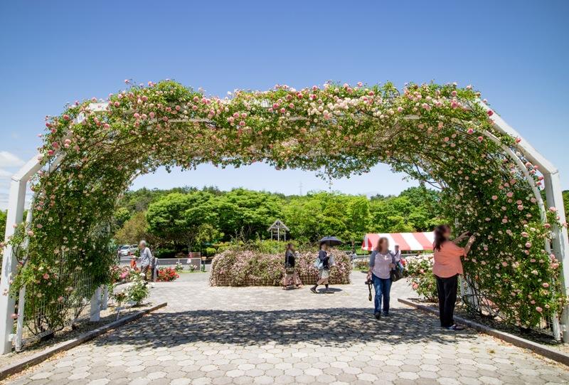 蜂ヶ峯総合公園、バラ園