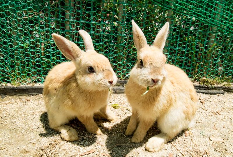 リフトカー乗り場の横にいる可愛いウサギ