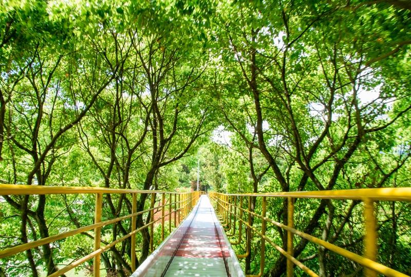 蜂ヶ峯総合公園、ローラーすべり台は木のトンネルをくぐる