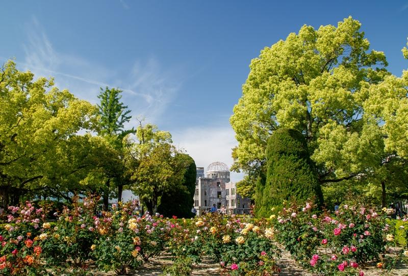 広島平和公園のバラ園と原爆ドーム