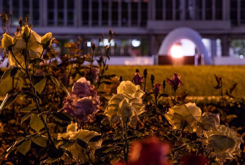 夜の広島平和公園、バラ園と広島平和都市記念碑