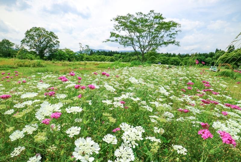 天意の里ハーブガーデンに咲く花