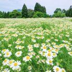 『天意の里ハーブガーデン』カモミール摘み&ハーブランチを食す!!