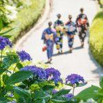 『三景園』1万株のアジサイ花回廊を歩く!鯉も元気一杯じゃ~!!