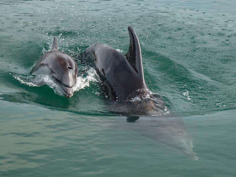 """しまなみ海道『ドルフィンファームしまなみ』に赤ちゃんイルカの""""にこ君""""誕生"""