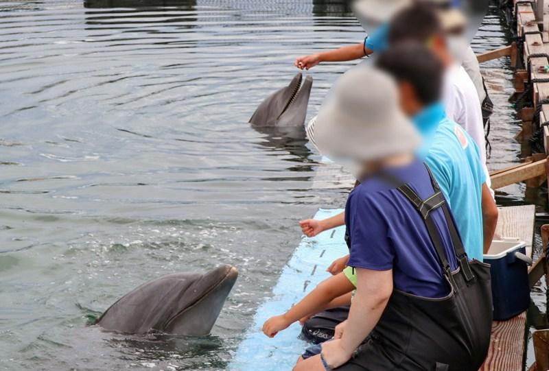 ドルフィンファームしまなみ、イルカと餌やり