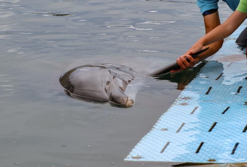 ドルフィンファームしまなみ、イルカと握手