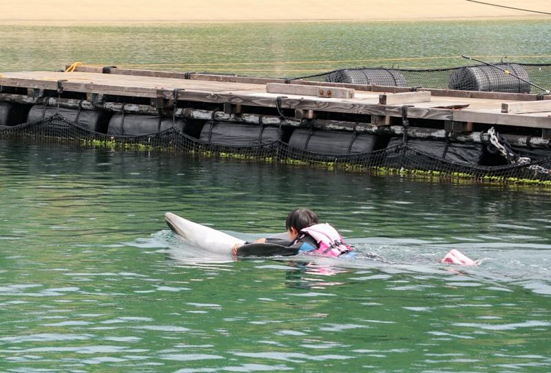 ドルフィンファームしまなみ、イルカと泳ぐ