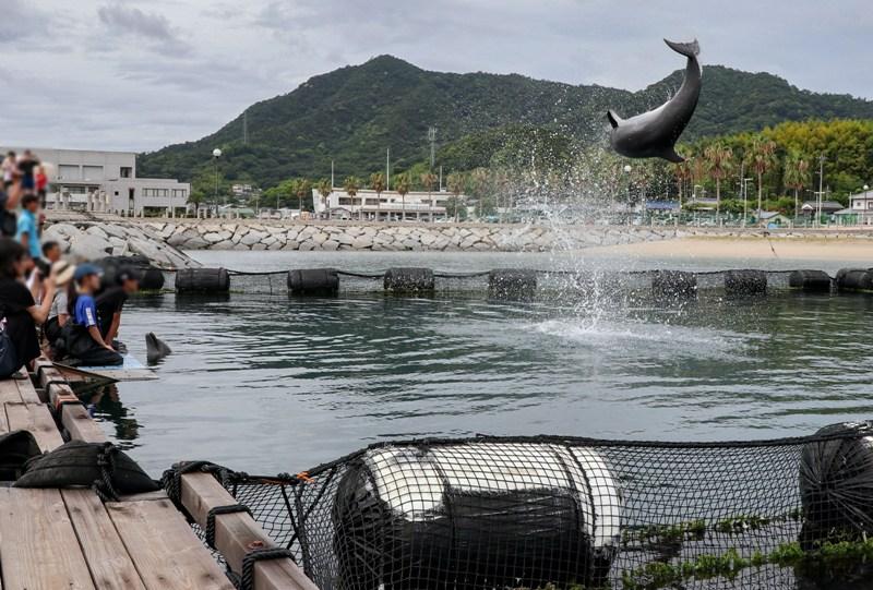 ドルフィンファームしまなみ、イルカのジャンプ