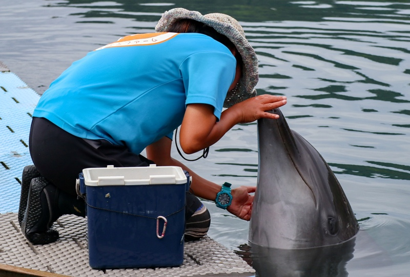 ドルフィンファームしまなみ、イルカの餌やり