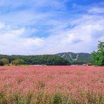『赤そばの里』赤い花を愛でる!美味しい蕎麦も頂きます!(北広島町)
