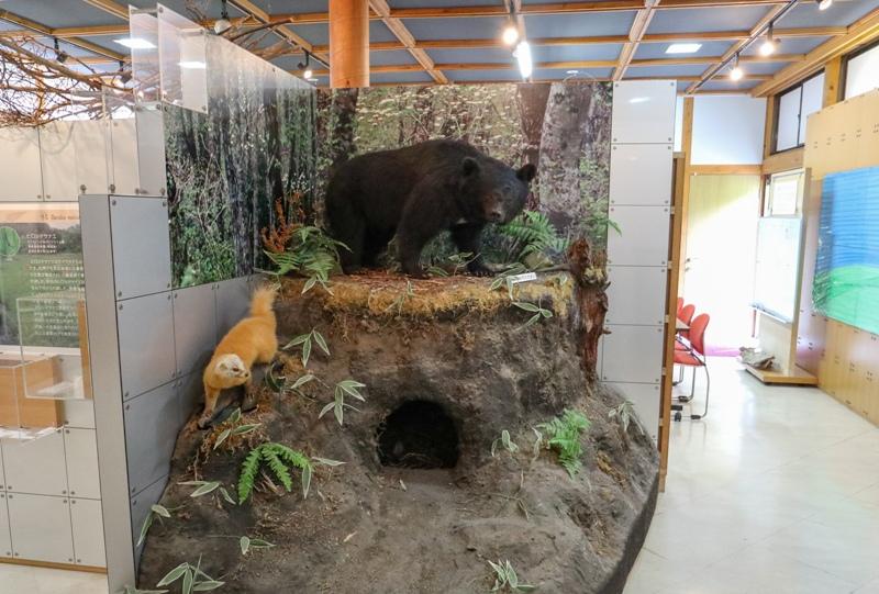 芸北 高原の自然館のツキノワグマのはく製