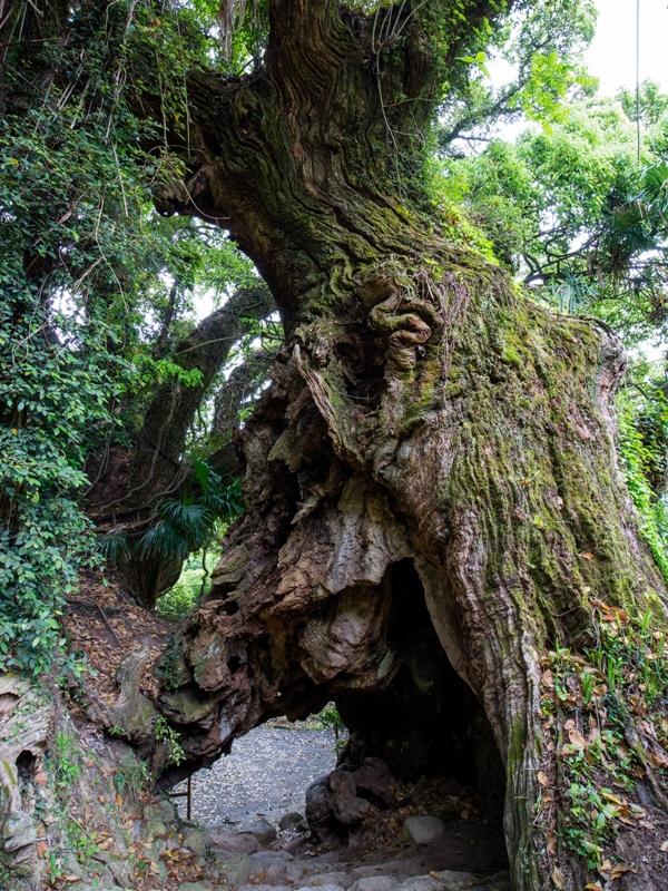 大山祇神社奥の院『生樹の御門』
