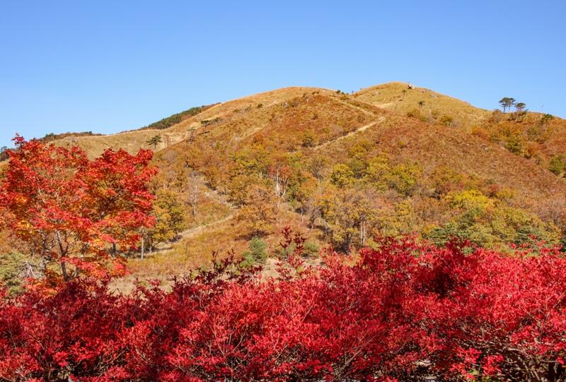 秋の深入山、青空とススキと紅葉