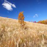 秋深まる『深入山』!青い空に紅葉とススキが美しかった!!